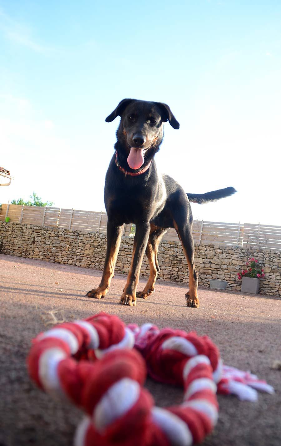 Itachi, le chien de berger des gîtes