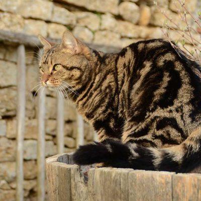 Mitzu, la maman chat qui vient visiter les gîtes